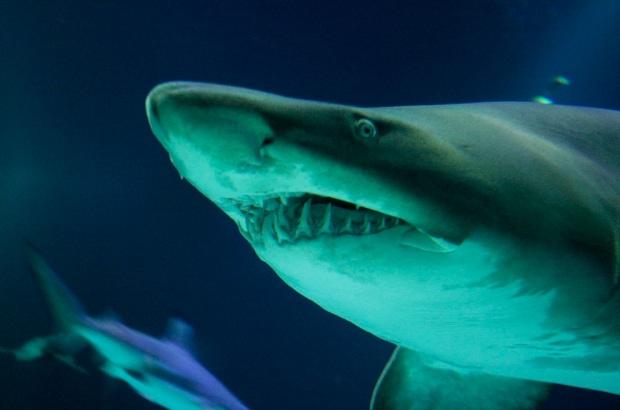 sharky likes the internet